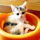 7月10日生まれの子猫♥️