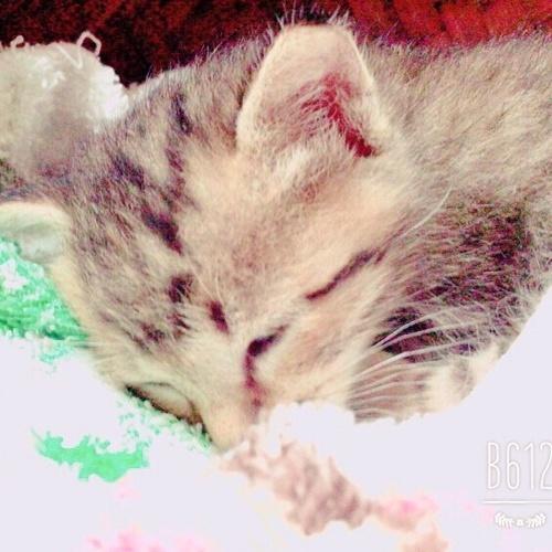 里親 子猫 生まれ の たばかり