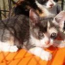 #2上越保護管理センターにいる子猫達の里親になってください(;_;)