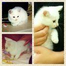 親猫(キジトラ)子猫(白猫3匹)