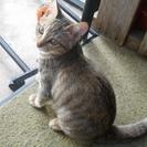 生まれて3ヶ月のメス猫ちゃんです!