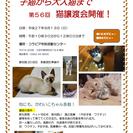 9月13日(日)AM10:30~12:00 猫譲渡会開催IN大府市
