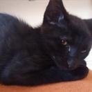 個性的な子猫たち ~アンニュイな黒猫ちゃん~