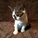 コアラに似た子猫よ、幸多かれ!