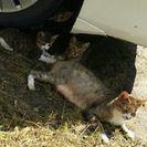 母猫ちゃんと子猫三匹。。