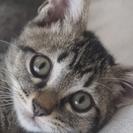 子猫を可愛がって下さる方、探しています(9月18日 更新)
