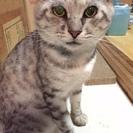 里親さん募集(事故に遭った猫)