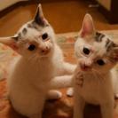 ≪生後約1ヶ月と思われるメスの子猫2匹です≫