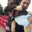 トレーニングからホテルまで、愛犬のお悩みご相談ください。