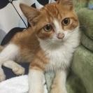 甘えん坊の子猫です。