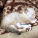 助けて下さい!1ヶ月半くらいの仔猫♂です。