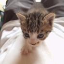子猫三匹9月上旬生まれ多分雌