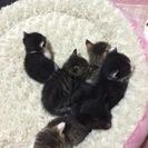 9月9日産まれ!6匹の猫ちゃん