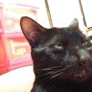 元気な黒猫1歳です