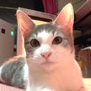 メス猫2014/9/1産まれです