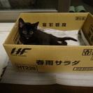 おめめパッチリ可愛いオスの黒猫ちいくんです