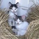 子猫の仲良し兄弟♡♡