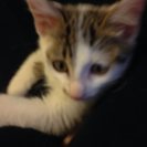 生後2ヶ月のオス子猫です