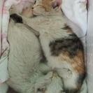 可愛い迷子ネコです(^_^)v