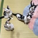 4兄弟の子猫の里親さん募集
