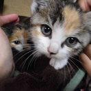 350gほどの子猫が2匹、です。