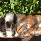 10月13日生まれ ウサギの赤ちゃん
