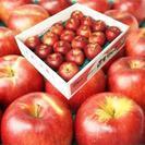 青森県三戸郡南部町産リンゴ5kg