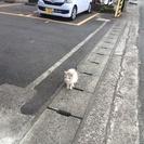 野良猫を助けて!