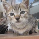 かわいい子猫の里親さん募集