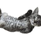 ねこ藩◆飼い主のいない猫と殺処分を減らしたい:寄付金付きマグカップの販売