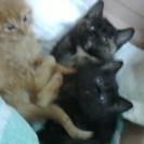 とても可愛い1か月の赤ちゃん猫貰ってニャン