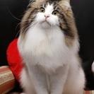 猫専門 ペットホテル・シッター・トリミング CATSPAW(キャ...