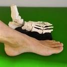 「足のファンクショナルトレーニング」の教室を開催します