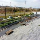 野菜を育てませんか? 貸農園 市原市草刈 ユニモ近く 村田川沿 日...