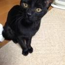 黒猫の女の子、6ヶ月です‼️