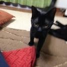 黒猫女の子②、6ヶ月です‼️