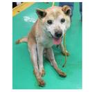 【迷子犬情報・収容期限3月19日まで】中型MIX犬迷子情報