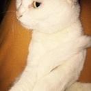 末期癌の母の飼い猫の里親さんを募集します