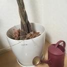 観葉植物のプランター