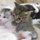保護猫の一時預かり