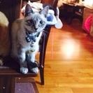 猫の里親を探しています。