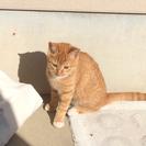 生後7ヶ月の猫ちゃんです。