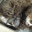 子猫産まれました