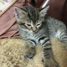 3月14日産まれの子猫