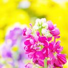 初心者さん大歓迎の写真教室「花をステキに撮ってみよう♪」