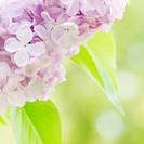 初心者さん大歓迎の写真教室「花をステキに撮ってみよう♪」 - 可児市