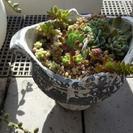多肉植物の寄せうえ アンティーク調の鉢入り