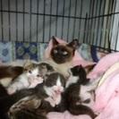 生後20日くらいの子猫ちゃん里親募集