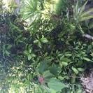 植木一千万円相当無料で差し上げます。
