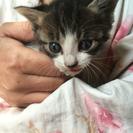 生後3週間ぐらいの兄弟猫ちゃん✳︎